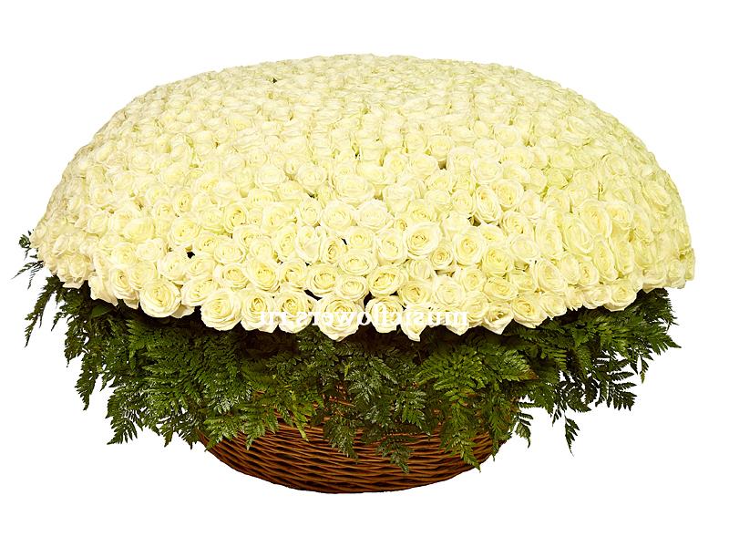 1001 белая роза с доставкой по Москеве