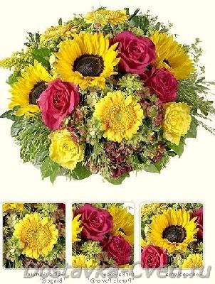 Семена цветов купить почтой, интернет магазин, каталог
