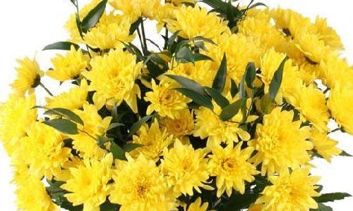 Из васильков и ромашек купить цветы с